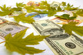 Dollars, Euro and autumn leaves Stock Photo