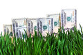 Dollars growing concept american currency on the fresh grass Royalty Free Stock Images
