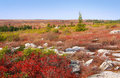 Dolly Sods Royalty Free Stock Photo