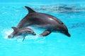 Delfín dieťa plávajúce v voda