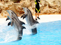 Dolphin Display #5 Royalty Free Stock Photo