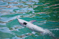 Dolphin doing tricks Royalty Free Stock Photo