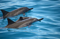 Dolphin Family Swimming Off Th...