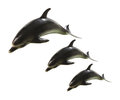 Dolphin figurines on white background Royalty Free Stock Image