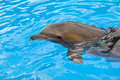 The dolphin floats in the pool blue Stock Photo