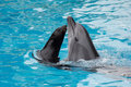Dolphin and fur seal swim in the pool Royalty Free Stock Photo