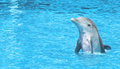 Dolphin happy on sea Royalty Free Stock Photo