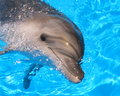 Dolphin Head Picture - Stock Photo Royalty Free Stock Photo