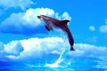 Dolphin high jump nice make from water against blue sky with clouds Stock Images
