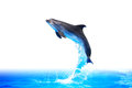 Dolphin high jump nice trained make from water on white background clipping path is included Stock Images