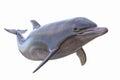 Dolphin isolated Royalty Free Stock Photo