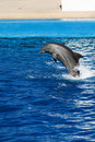 Dolphin jumping out of the water Stock Image