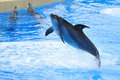 Dolphin Jumping in the Pool Stock Images
