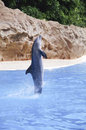 Dolphin jumps vertically dancing in the park on the play Stock Photo