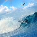 Delfín skákajúci von kučeravý rozbíjanie oceán vlna