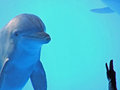 Dolphin in ocean world Royalty Free Stock Photo