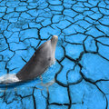 Dolphin out of Dry mud Royalty Free Stock Photo