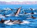 Delfín hliadka