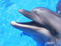 Dolphin Picture - Beautiful Dolphins Stock Photos Royalty Free Stock Photos