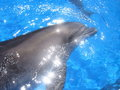 Dolphin picture stock photos bottlenose dolphins head blue water Royalty Free Stock Photos