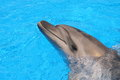 Dolphin picture stock photos images dolphins bottlenose smiling in blue water Royalty Free Stock Photo