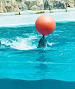 Dolphin playing with red ball Stock Photo