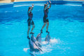 Dolphin show art of balance the trainers balances on top s nose the photo is shot at zoomarine guia portugal Stock Photography