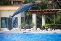 Dolphin show Royalty Free Stock Photo