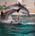 Dolphin show in the Dolphinarium Royalty Free Stock Images