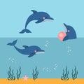 Dolphin Show, Dolphinarium, Se...