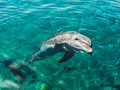 Dolphin smiles like mona lisa and looking from clear sea water Stock Images
