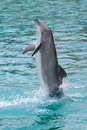 Dolphin standing Royalty Free Stock Photography