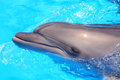 Dolphin stock photos picture bottlenosed dolphins in blue water Stock Images