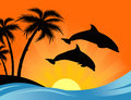 Dolphin Sunset Royalty Free Stock Photography