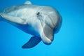 Delfín voda