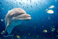 Dolphin Underwater On Blue Oce...