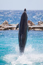 Dolphin walking on water Stock Photography