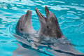 Dolphins a couple of smiling Royalty Free Stock Photos