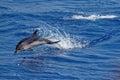 Delfíny v priepasť z janov