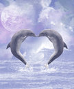 Dolphins kisses two kissing forming a heart the full moon shines a sweet dolphin scene Royalty Free Stock Photos