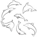 Dolphins line drawing of on white Royalty Free Stock Photos