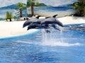 Delfíni na zoologická zahrada