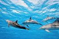 Dolphins in the sea Stock Images