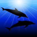 Dolphins in sea on sunburst background illustration Royalty Free Stock Photos