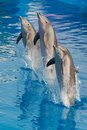 Dolphins three do the performance in the show in aquarium Stock Photos