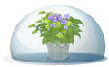 A dome with a pot with plant illustration of on white background Royalty Free Stock Images