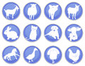 Domestic animals icon set a of icons Stock Photos