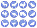 Domestic animals icon set a of icons Royalty Free Stock Images