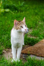 Domestic cat in the garden curious Royalty Free Stock Images