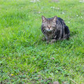 Domestic cat in a grass green field composition Stock Images